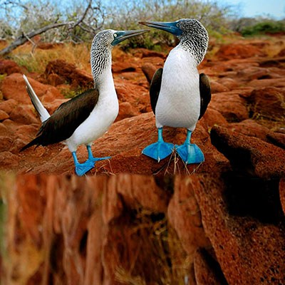 Boutique_Travel_with_Galapagos_Hotel_mal