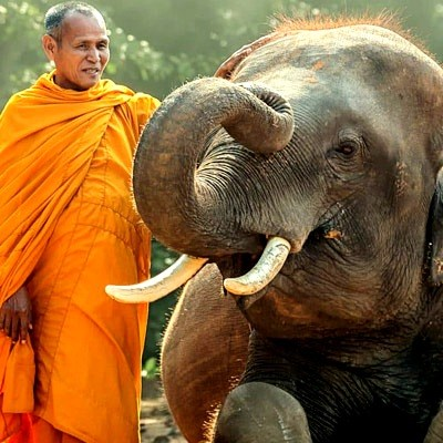 monk-and-baby-elephant